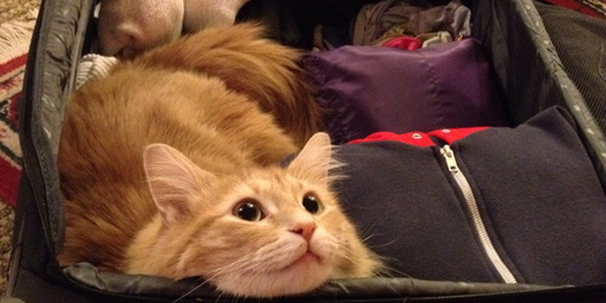Samsonite Promises 'Room for Cats' in Latest...