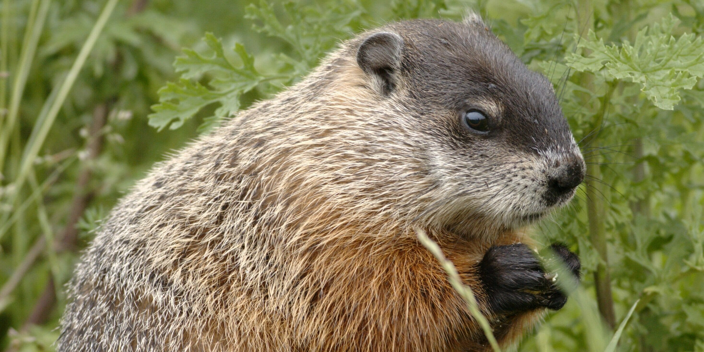 everyone on twitter is upset about this cop who shot a groundhog
