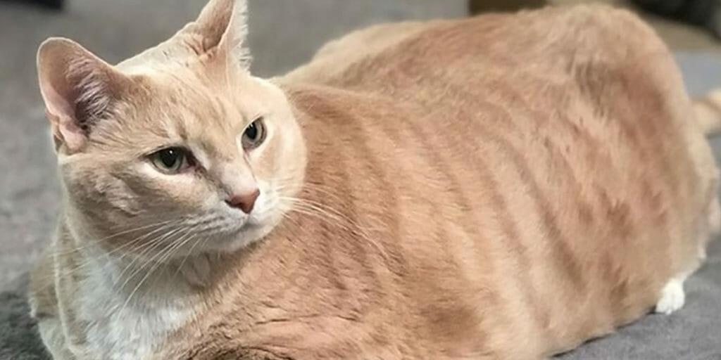 bronson the cat