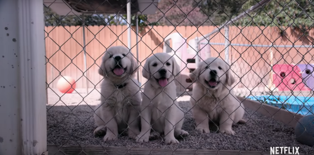 Netflix's 'Dogs' is making everyone on Twitter ugly cry