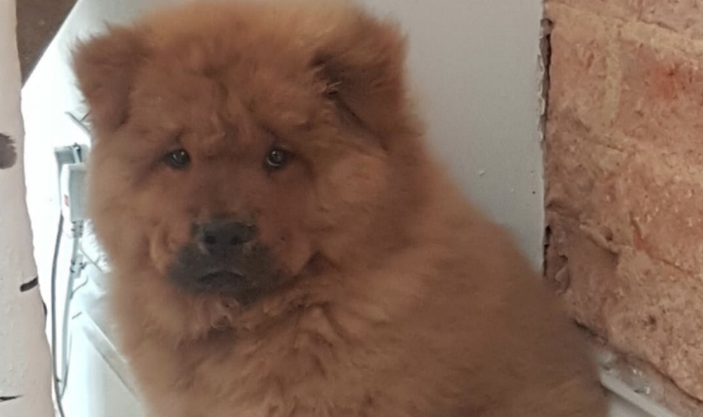 puppy freed from police custody