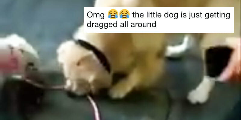 People love this GIF of a dog trying to steal another dog