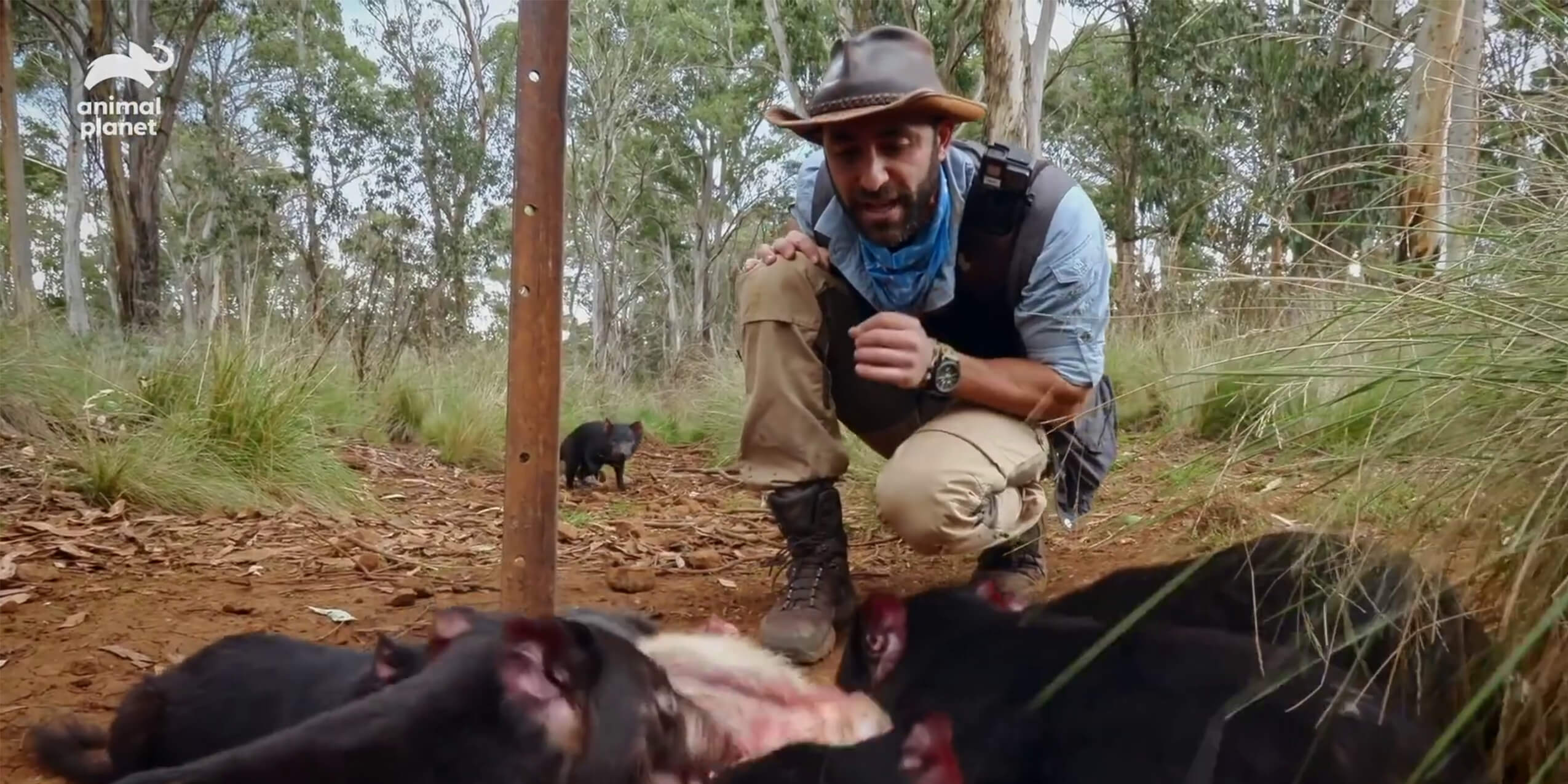 Coyote Peterson brave the wild