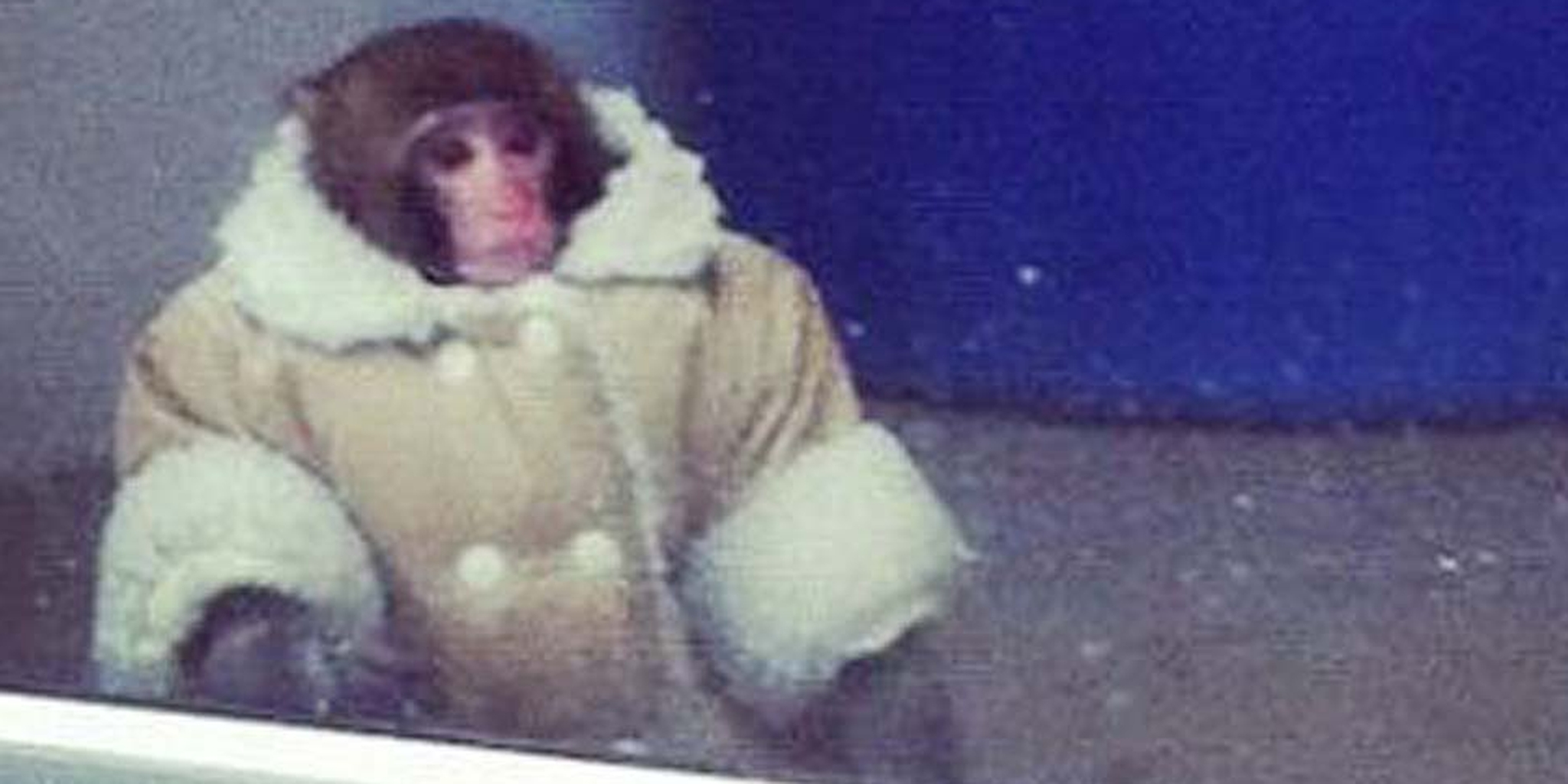 stop everything and follow the ikea monkey trial on