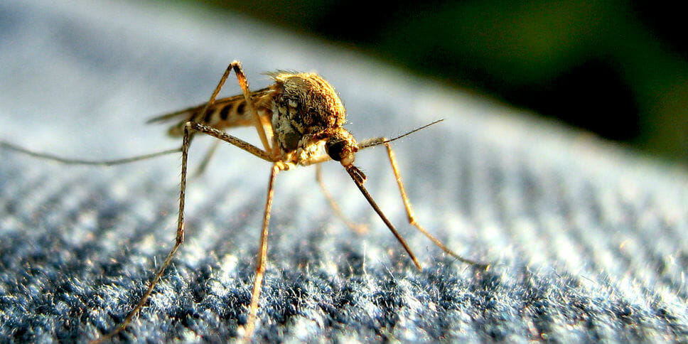 Death threat against mosquito gets guy's Twitter account permanently frozen