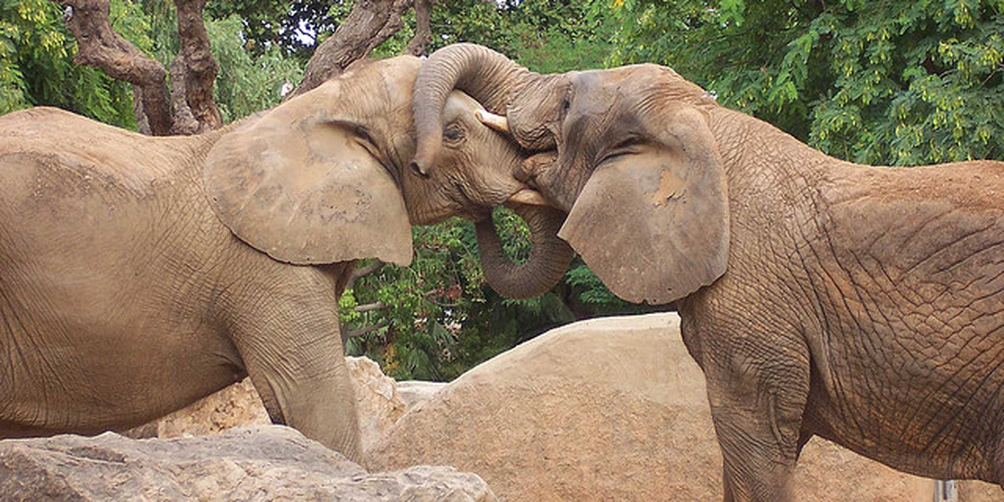 elephants making out