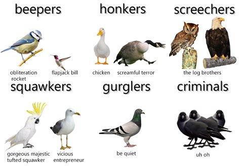 types of birb meme