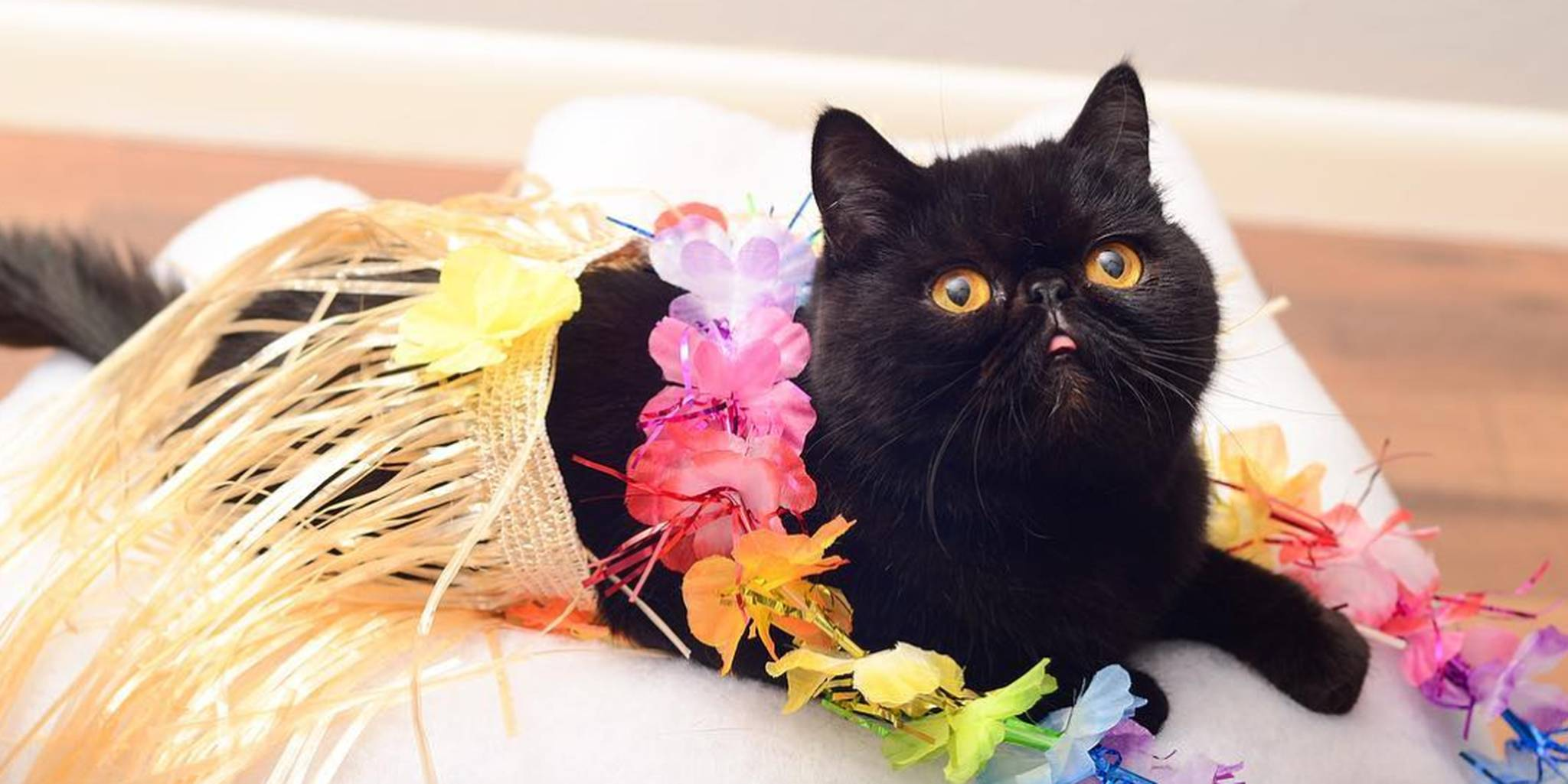 Cat Halloween Costumes Cats Photo Album - Best Fashion Trends and ...