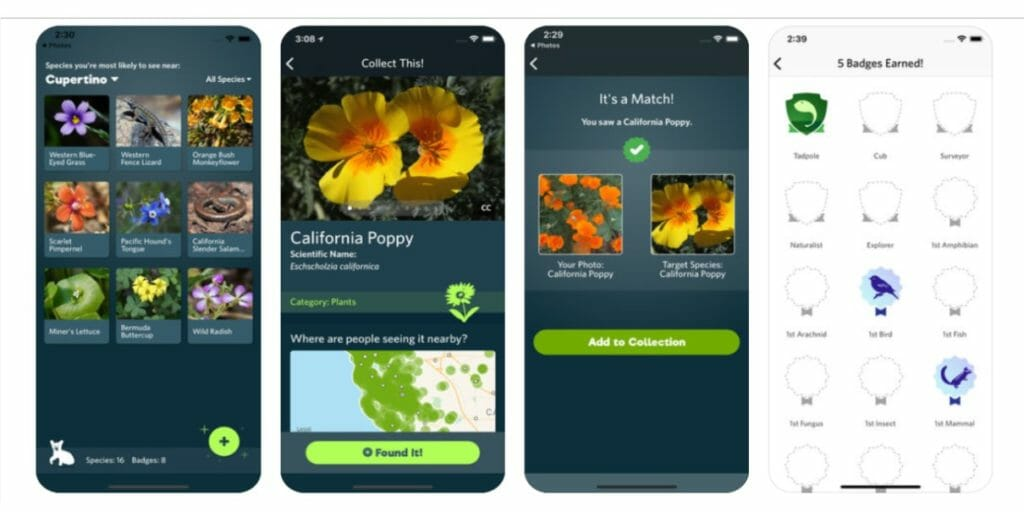 Seek app helps you identify plants and animals with your phone