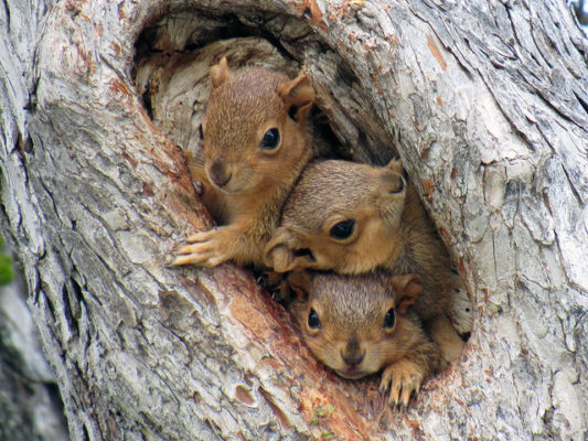squirrels in a tree