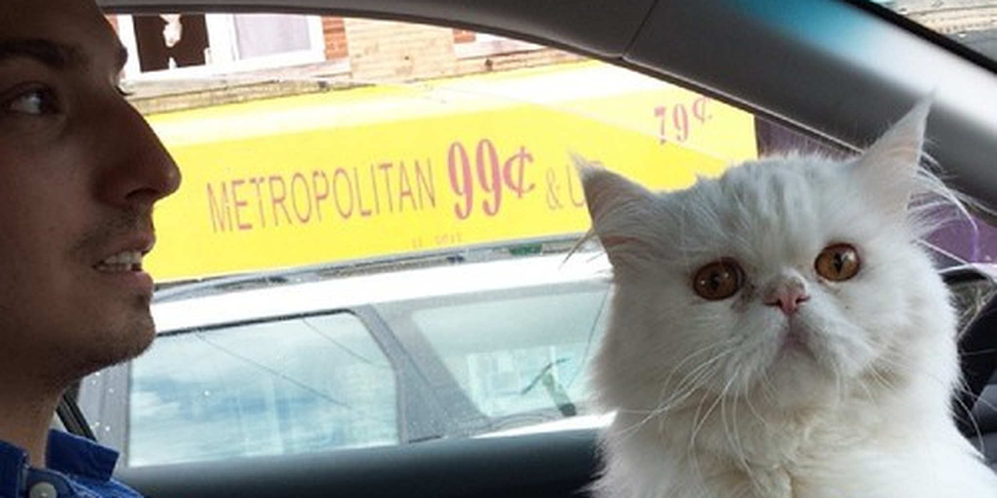Cat Insists on Riding Up Front in Taxi  Sheila the...