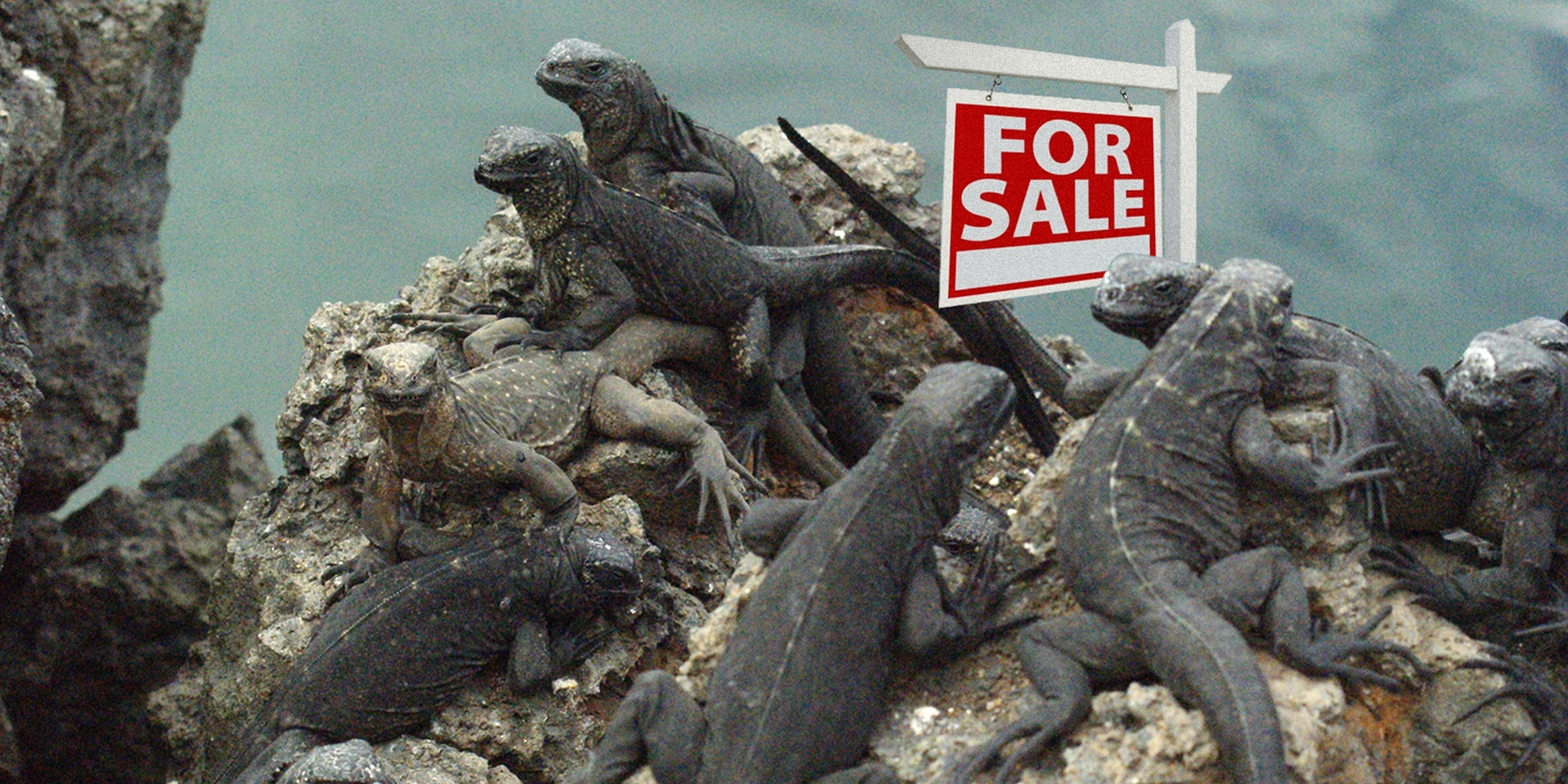 Lizards on Rock with For Sale Sign
