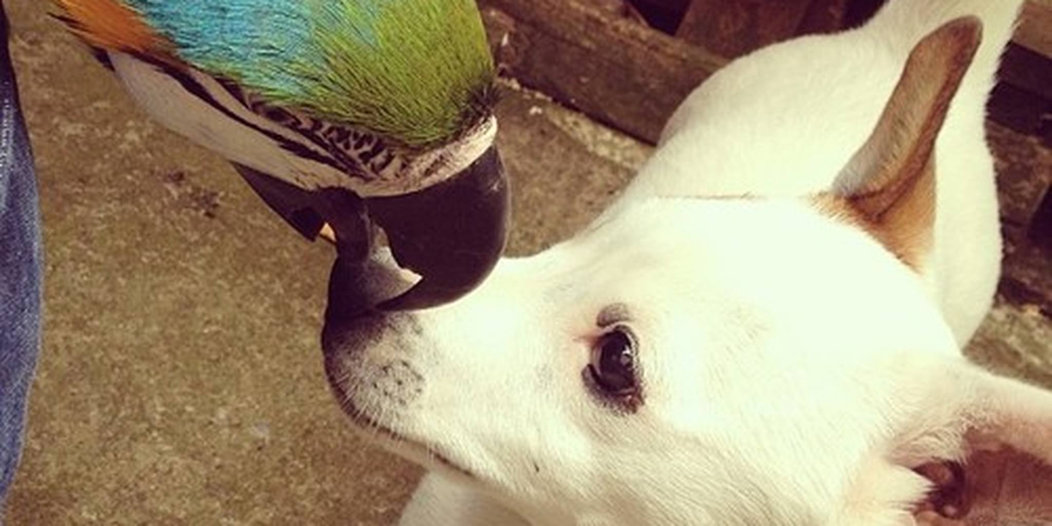 Dog and Parrot No Longer Speaking After Incident ...