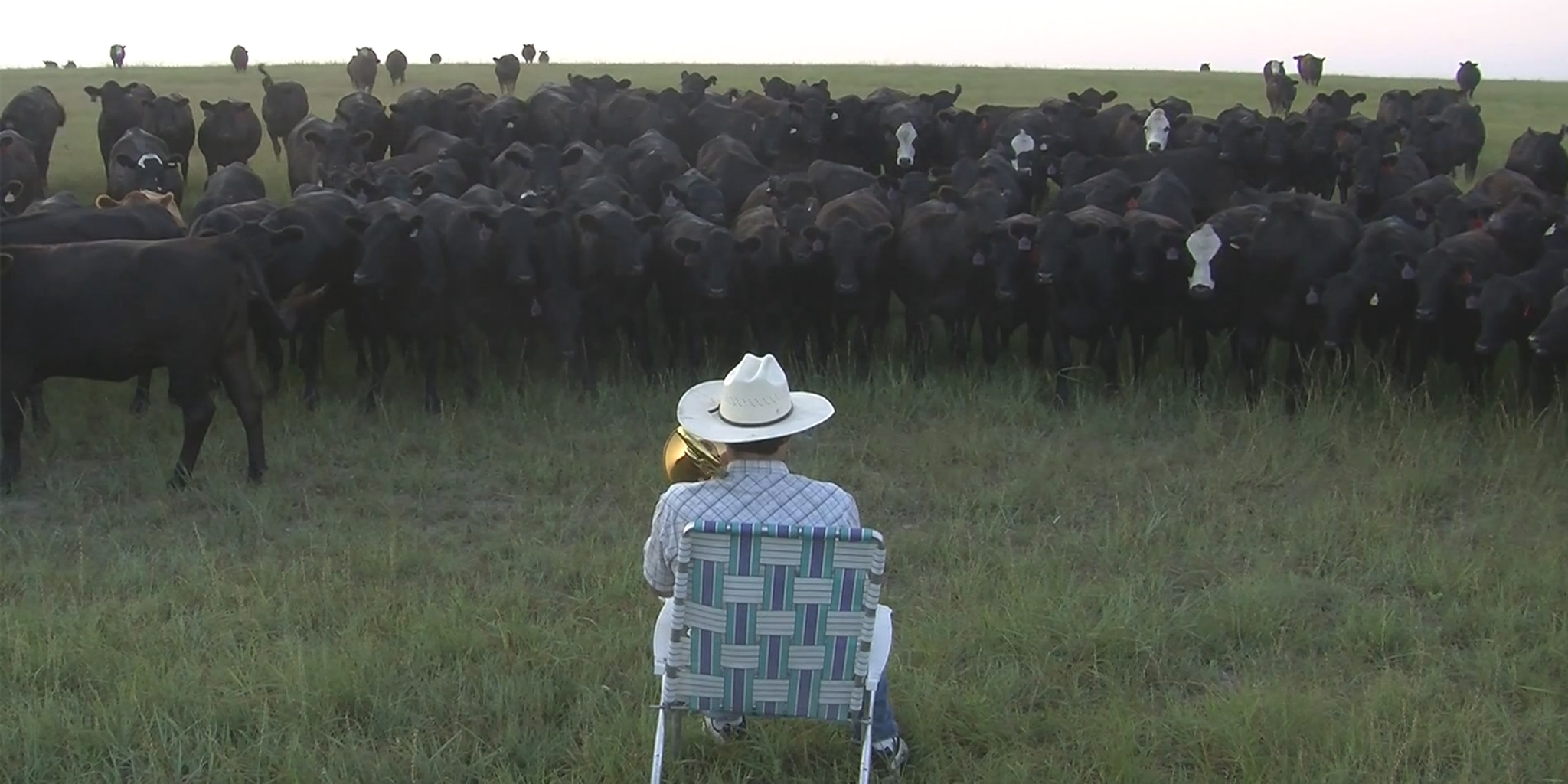 farmer playing royals to cows