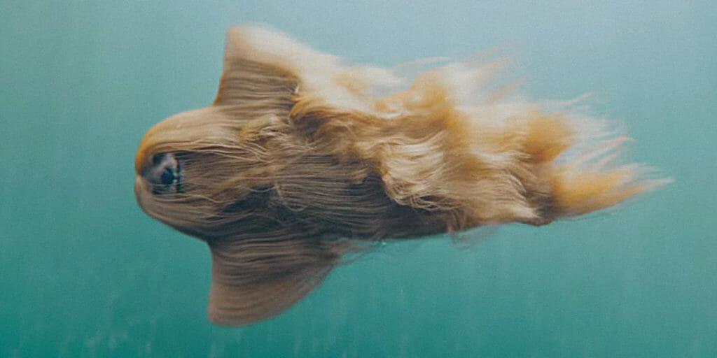 Mermaid Dog swimming through pool