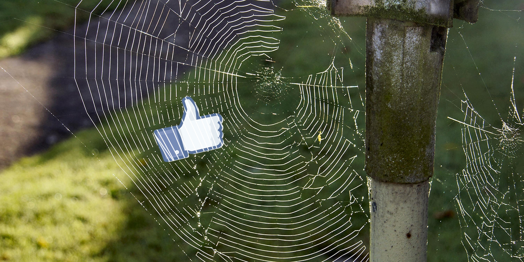 fb-spiderweb.jpg (1440×720)