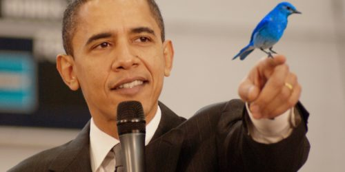 twitter bird yelling at the obama logo