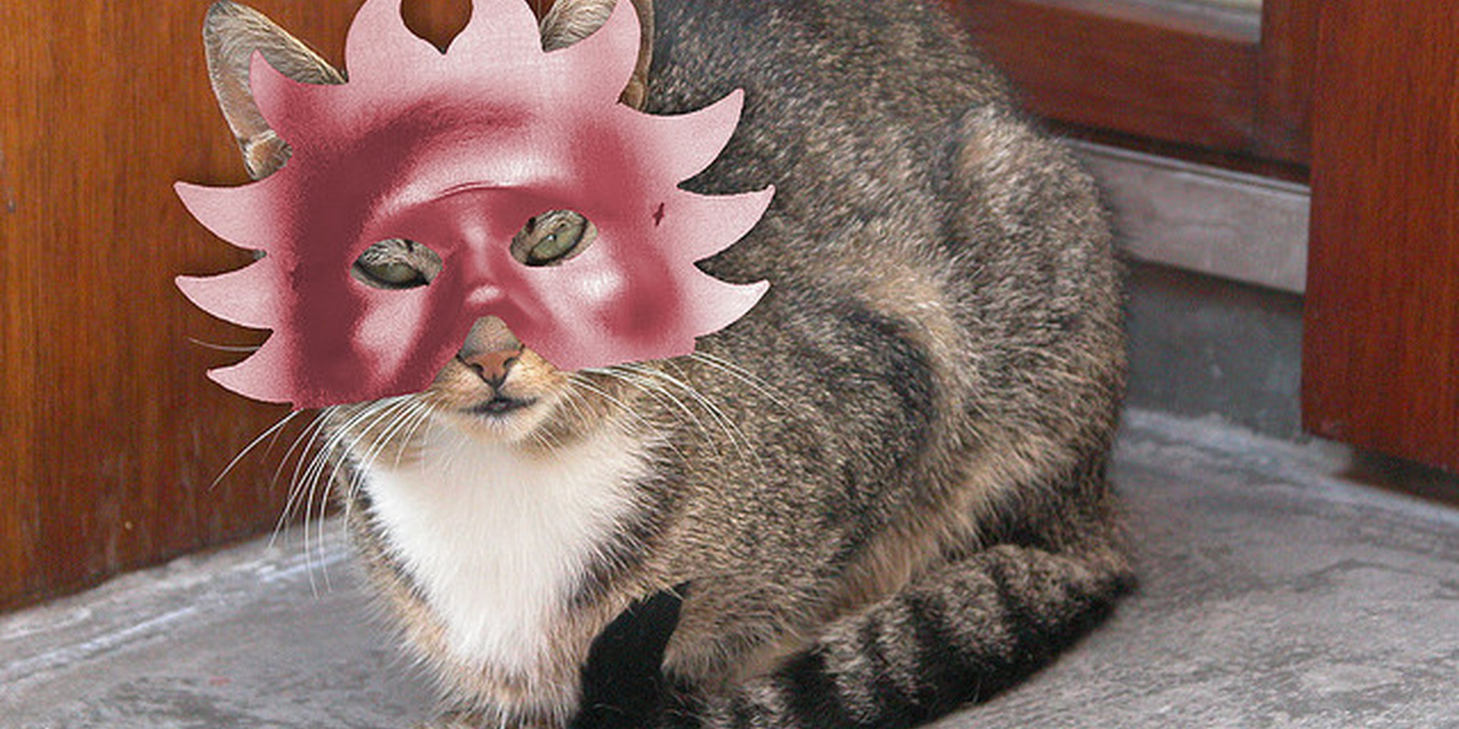 Cat with a mask