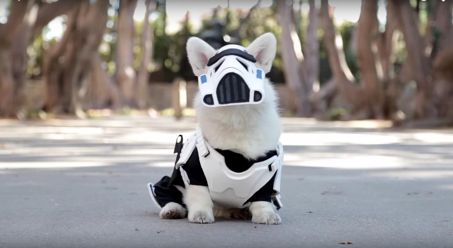 corgi storm trooper
